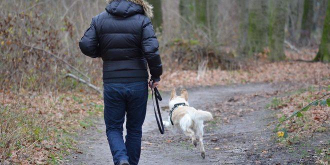 éducation d'un chien