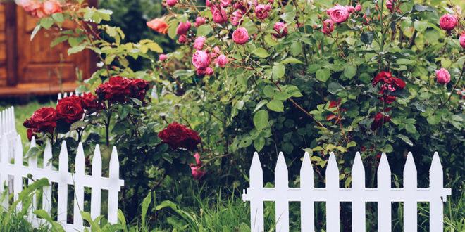 couleur du jardin