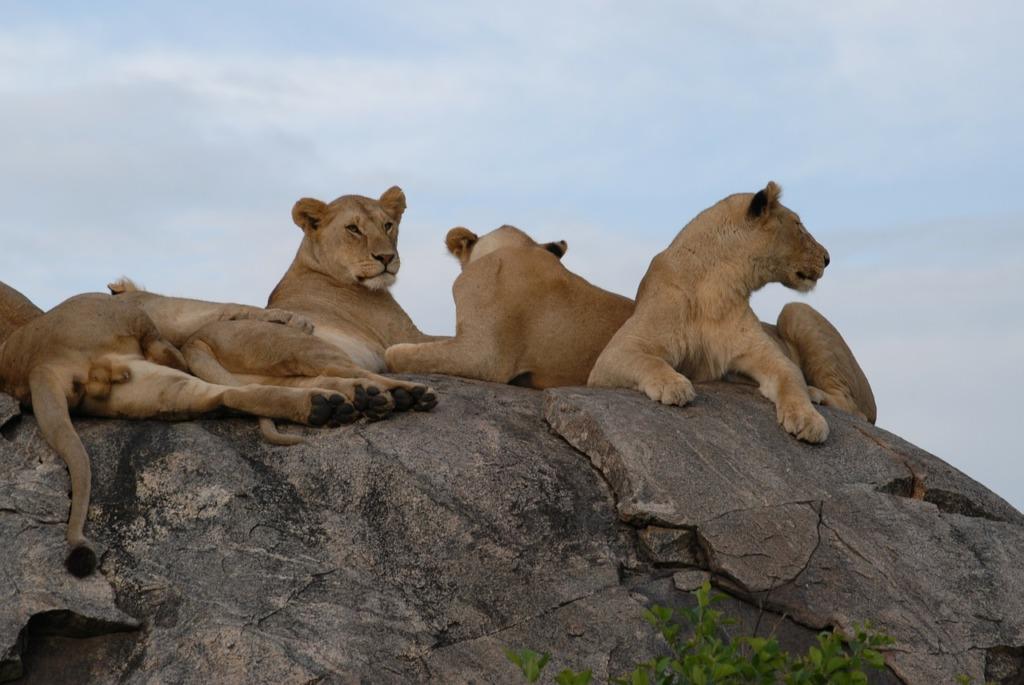 visites en Afrique