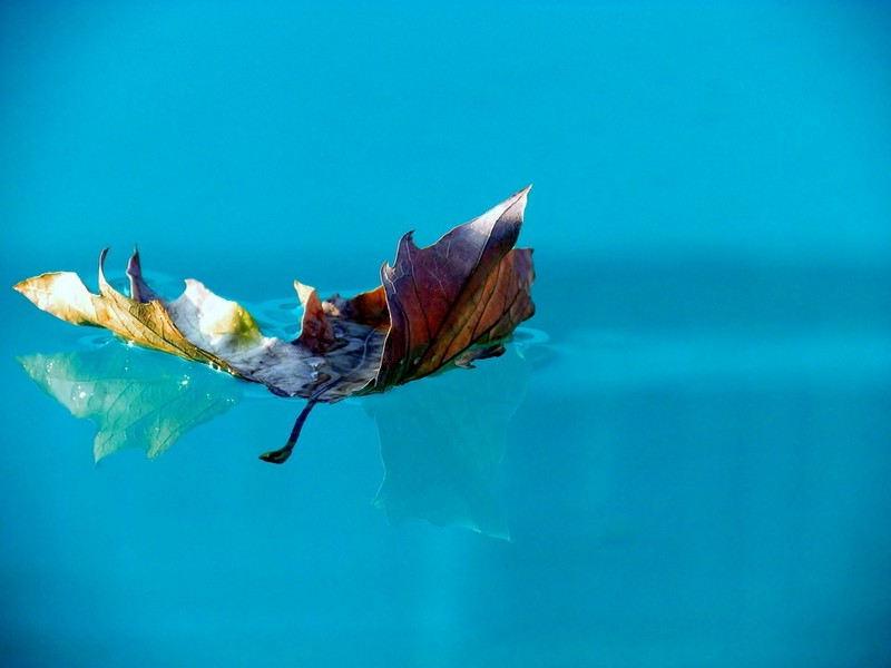 Nettoyer les feuilles de la piscine