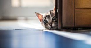 vermifuge pour chat